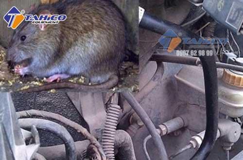 Mùi của phân chuột…trộn lại sẽ khiến khoang máy của bạn có mùi khó chịu